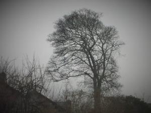 Rat Tree